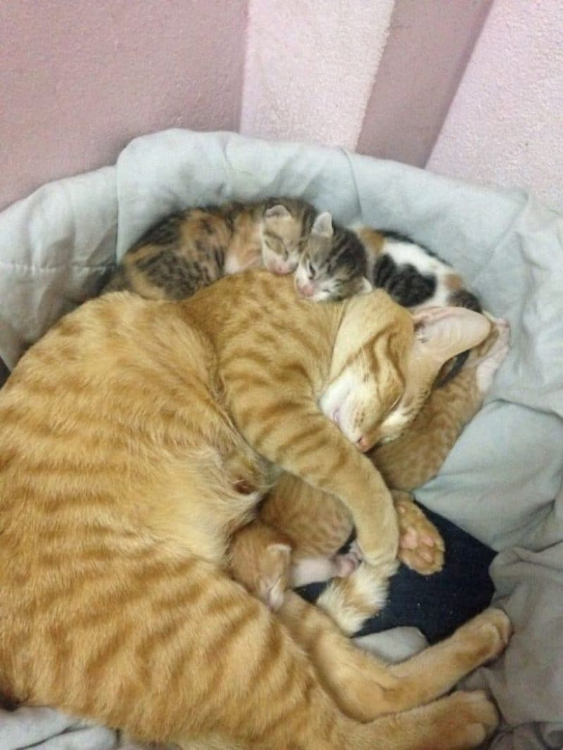 http://lifeterritory.su/wp-content/uploads/2018/01/Cat-Supports-Mom-Cat-Giving-Birth-10-1024x1364.jpg