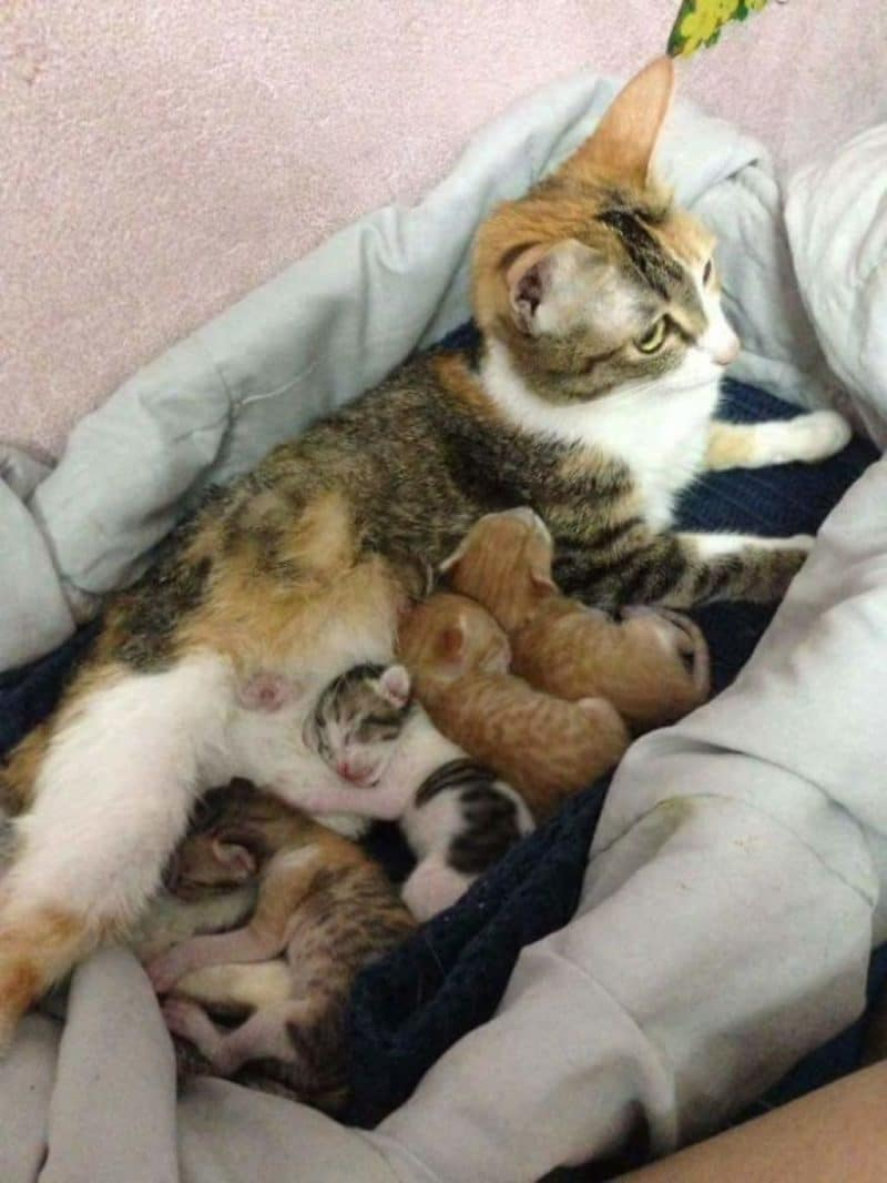 http://lifeterritory.su/wp-content/uploads/2018/01/Cat-Supports-Mom-Cat-Giving-Birth-03-1024x1364.jpg