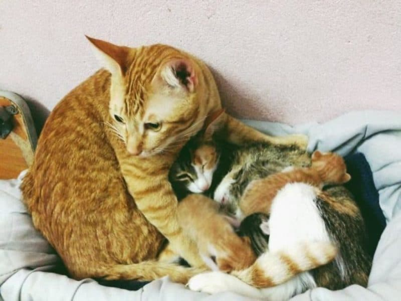 http://lifeterritory.su/wp-content/uploads/2018/01/Cat-Supports-Mom-Cat-Giving-Birth-09-1024x768.jpg
