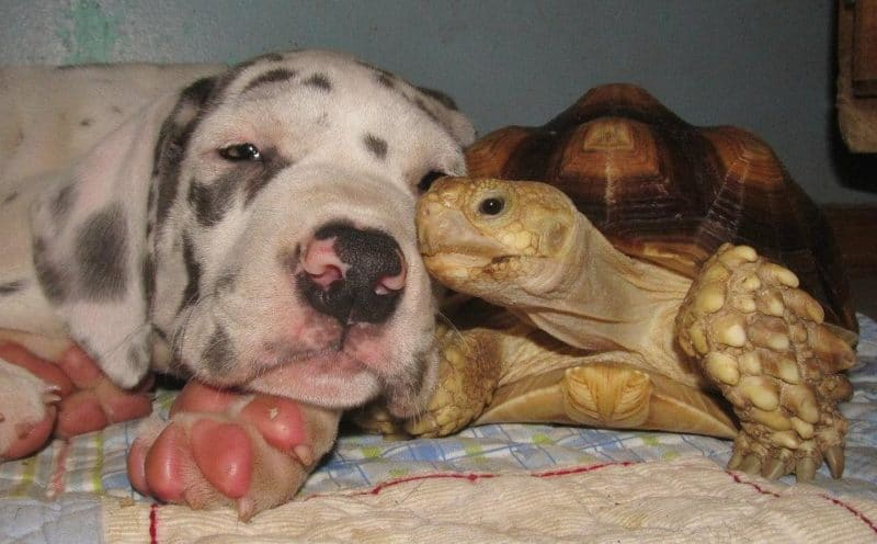 http://wowow.life/wp-content/uploads/puppy-and-turtle-animal-advocacy.jpg